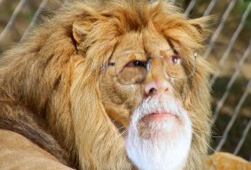 Grandpa Simba